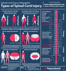 incomplete-spinal-cord-injury-Infographic-icon