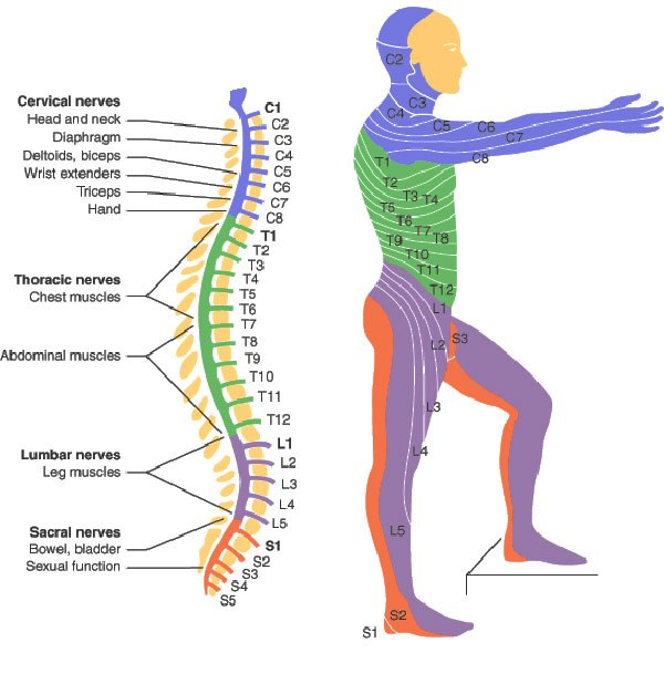 spinal-cord-injury-levels | alicia reagan